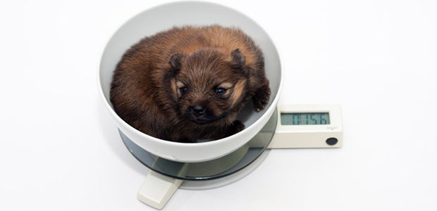 How to Put Weight on a Dog