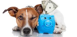 Money Saving Tips for Pet Owners