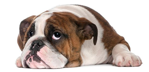 Best Dog Food for Sensitive Stomach