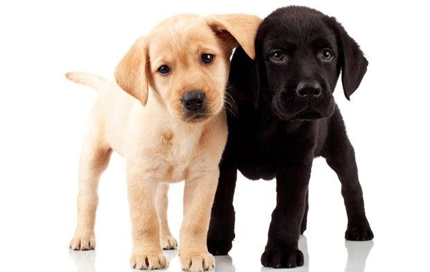 Healthy Dog Food Brands