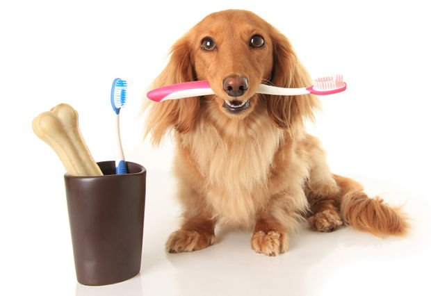 How to Clean Dogs' Teeth