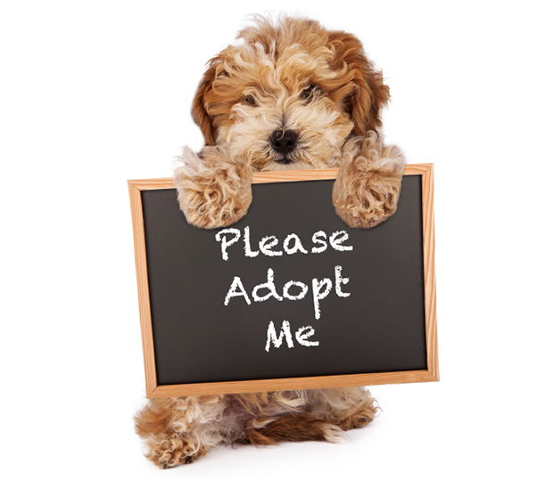 Most Popular Pet Adoption Websites