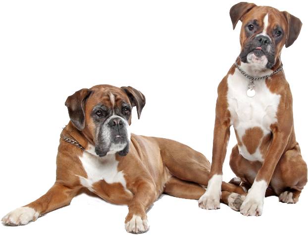 Top Listed Ingredients in Boxer Dog Foods