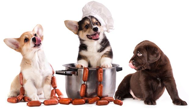 How to make dog food