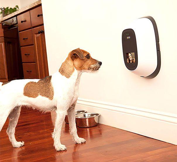 Digital Doggies Petchatz – Interactive Pet-Cam