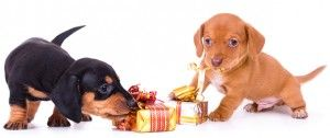 Inspiring Gifts for Dogs