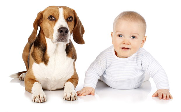 Introduce Your Dog to Your New Baby