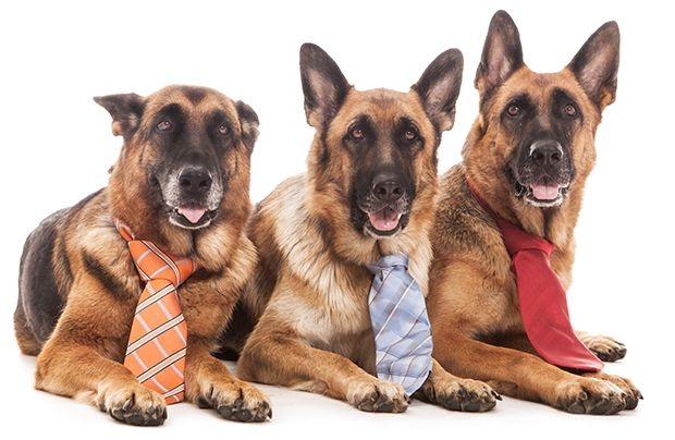 Benefits of taking your dog to work