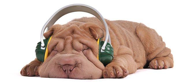 The 10 Quietest Dog Breeds
