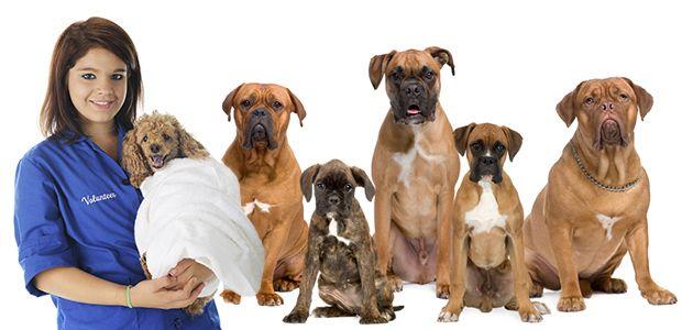 Animal Shelter Volunteering