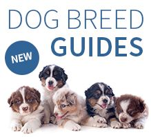 Dog Breed Guides