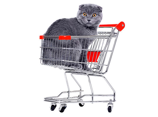 Free Cat Food Samples and Coupons