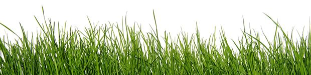 Grass - Relieves Upset Stomach in Dogs
