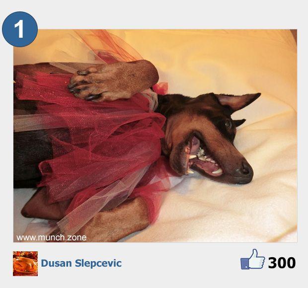 1 - Dusan Slepcevic