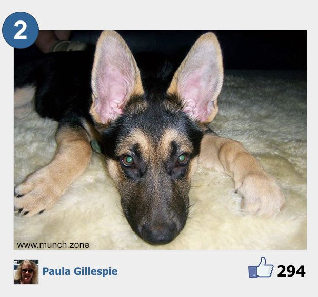 2 - Paula Gillespie