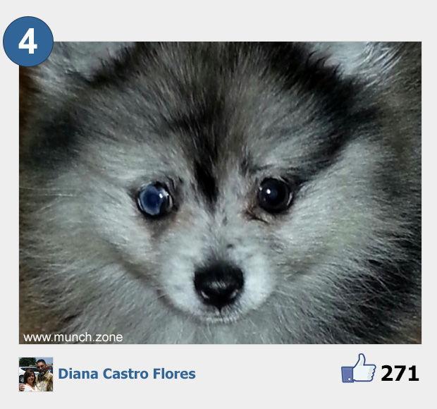 4 - Diana Castro Flores