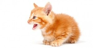 5 Reasons Why Cats Cry at Night