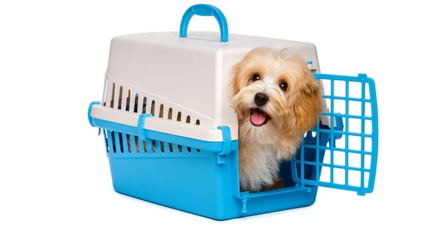 Airline approved carriers and kennels