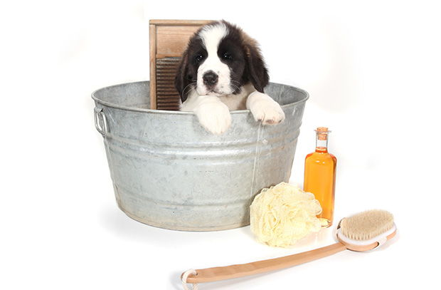 Bathe your dog once a month or so and keep their coat shiny