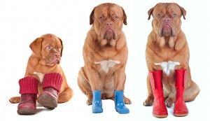 Boots and Shoes for Dogs