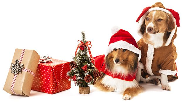 Christmas Gifts for Dogs and Dog Lovers