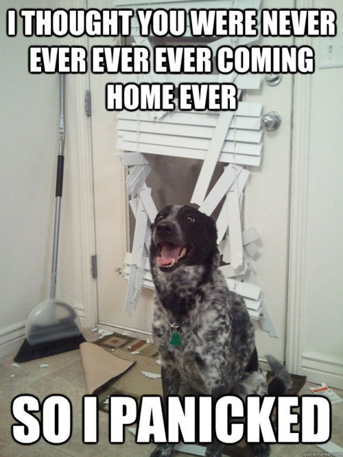 Dog separation anxiety meme