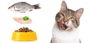 Homemade Cat Food Recipes