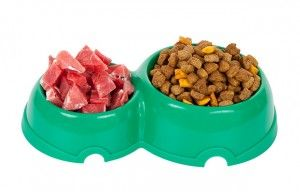 Making the Switch from Kibble to Raw Diet