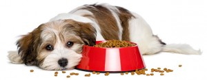Upset Stomach in Dogs