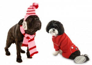 Winter Accessories for Dogs