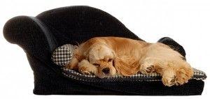 10 Best Indoor Dog Breeds