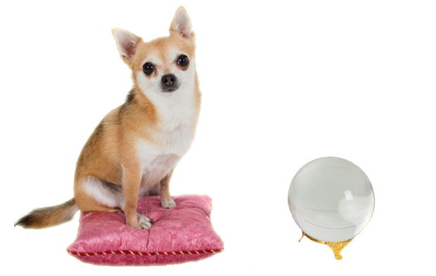 Are Pet Psychics Worth Trying