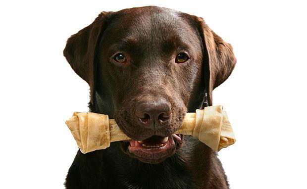 Benefits of Bones for Dogs