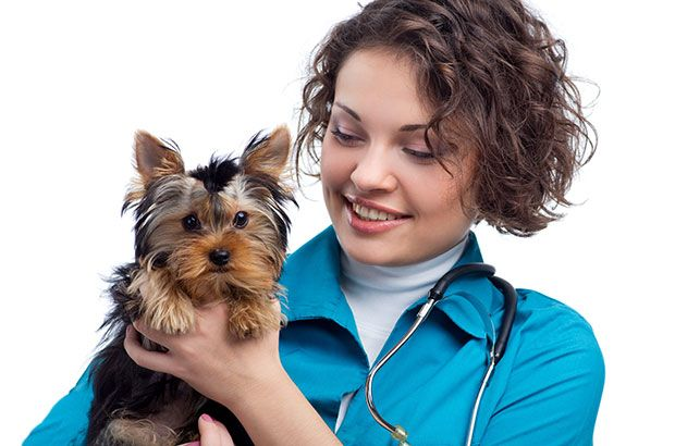 Can Humans Catch Canine Parvovirus