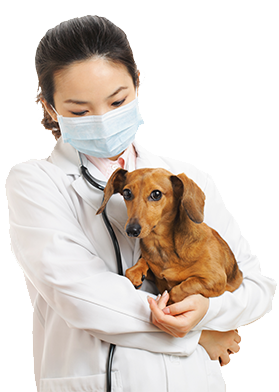 Canine Parvovirus in Dogs