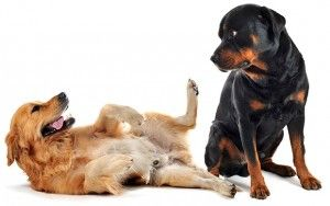 Dominance Theory in Dog Training