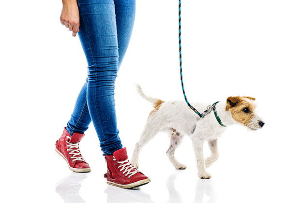 How to Know if Your Dog Walker Actually Walked Your Dog