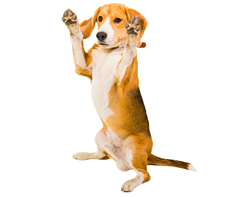 Reasons Why Dogs Compulsively Lick Their Paws
