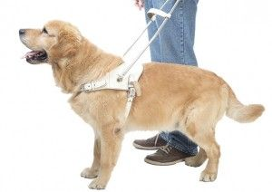 The Important Jobs of Service Dogs