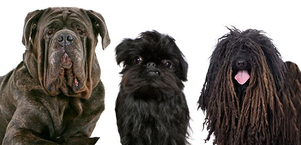 Weirdest Looking Dog Breeds