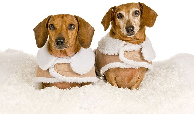 Winter Care - Dogs, Cold Weather and Snow
