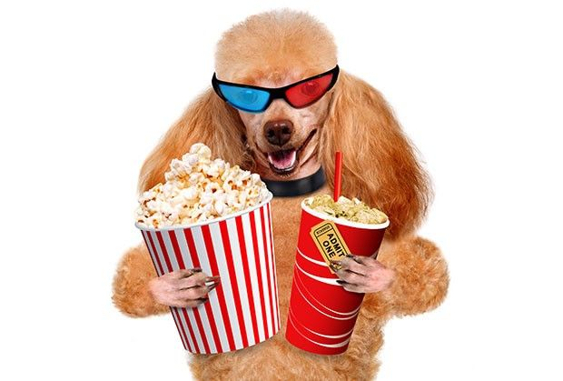 Movies for Dog Lovers