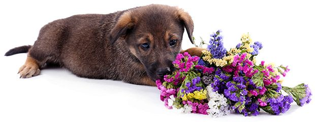 Safe Plants for Dogs