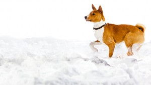 Snow, Ice Melt and Your Dog
