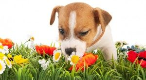 Toxic Plants for Dogs