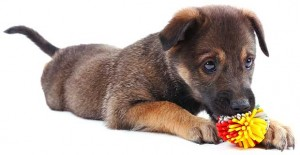 Overcoming Your Dog's Toy Obsession