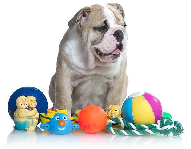 Toy Obsession in Dogs