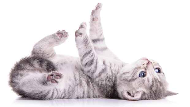 Train a Cat