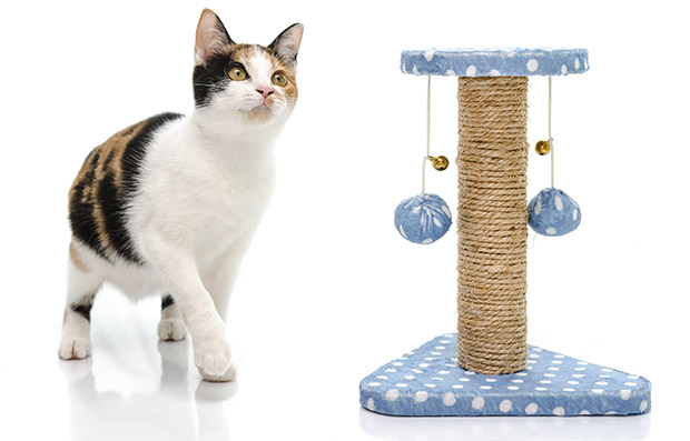 Best Toys for Cats