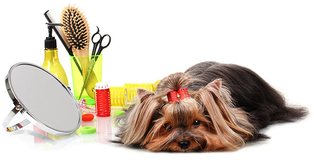 Dog Grooming Extreme